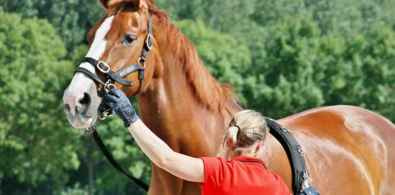 Starten van het jonge paard